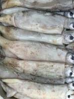 FishTraffic Звоните Вам Ответят